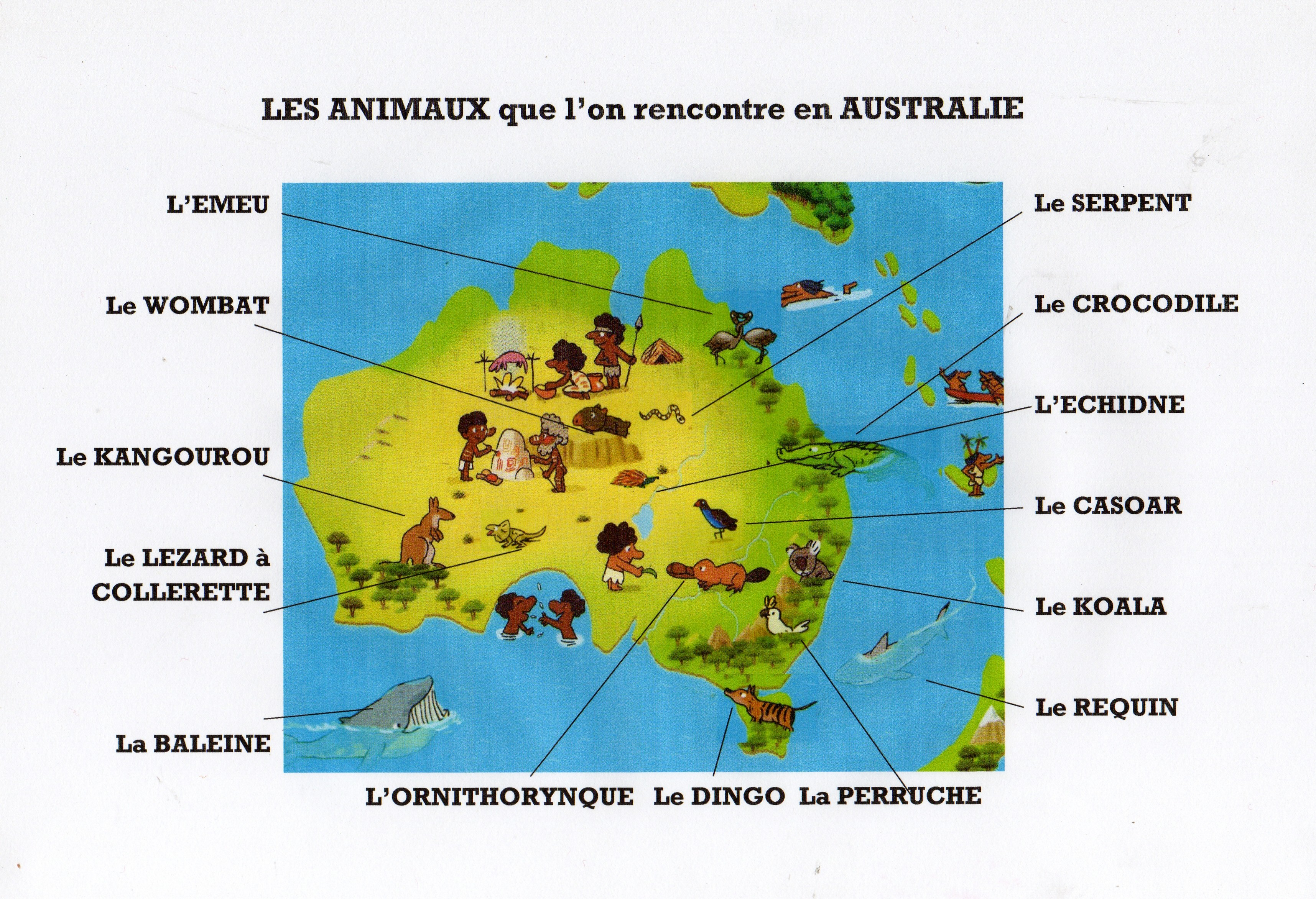 d u00e9couvre les animaux qui vivent en australie et apprends  u00e0 les reconna u00eetre